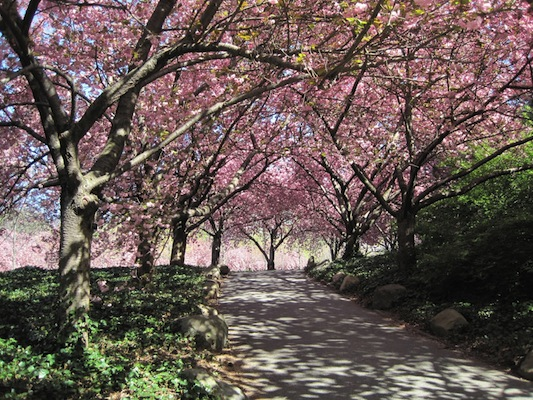 brooklyn-botanic-garden-stunning-hd-wallpapers