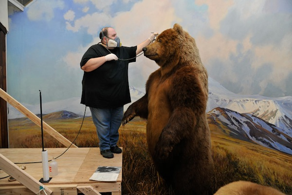 6278-alaskan-brown-bear-in-progress_df_660