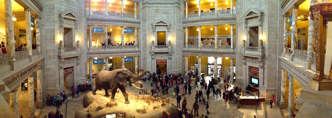 National_Museum_of_Natural_History_Rotunda_pano
