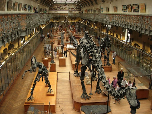natural_history_museum_paris_dinosaur_collection